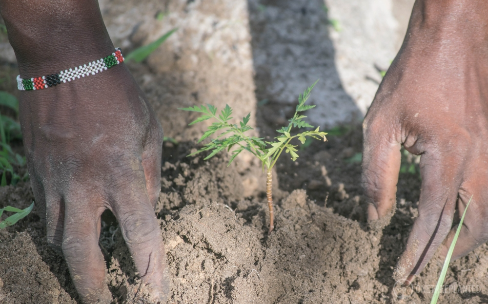 One Tree Planted-20